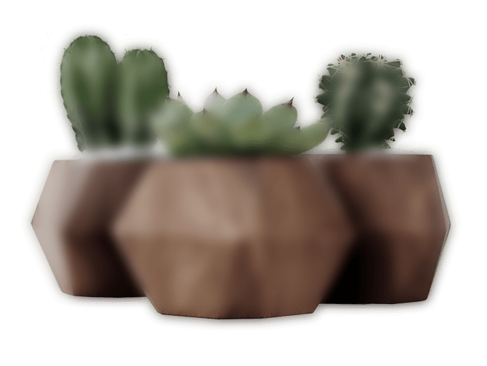 dark slider 3 plant