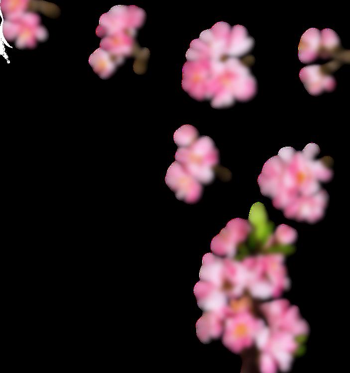 right side sakura